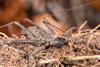 http://mczbase.mcz.harvard.edu/specimen_images/invertebrates/large/143945_Amblypygi_2.jpg