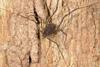 http://mczbase.mcz.harvard.edu/specimen_images/invertebrates/large/143947_Cynortula_4.jpg