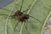 http://mczbase.mcz.harvard.edu/specimen_images/invertebrates/large/143951_Amblypygi_6.jpg