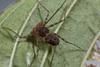 http://mczbase.mcz.harvard.edu/specimen_images/invertebrates/large/143951_Amblypygi_7.jpg