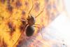 http://mczbase.mcz.harvard.edu/specimen_images/invertebrates/large/143969_Scytodidae_1.jpg