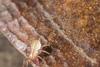 http://mczbase.mcz.harvard.edu/specimen_images/invertebrates/large/144011_Tridenchthonius_6.jpg