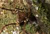 http://mczbase.mcz.harvard.edu/specimen_images/invertebrates/large/144012_Cranaidae_1.jpg