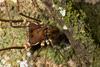 http://mczbase.mcz.harvard.edu/specimen_images/invertebrates/large/144012_Cranaidae_2.jpg