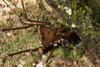 http://mczbase.mcz.harvard.edu/specimen_images/invertebrates/large/144012_Cranaidae_3.jpg