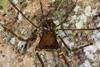 http://mczbase.mcz.harvard.edu/specimen_images/invertebrates/large/144012_Cranaidae_6.jpg