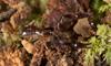 http://mczbase.mcz.harvard.edu/specimen_images/invertebrates/large/144026_Olpiidae_2.jpg