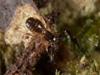 http://mczbase.mcz.harvard.edu/specimen_images/invertebrates/large/144026_Olpiidae_3.jpg
