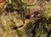 http://mczbase.mcz.harvard.edu/specimen_images/invertebrates/large/144026_Olpiidae_8.jpg