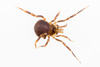 http://mczbase.mcz.harvard.edu/specimen_images/invertebrates/large/144057_Maracaynatum_trinidadense_5.jpg