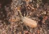 http://mczbase.mcz.harvard.edu/specimen_images/invertebrates/large/144082_Symphytognathidae_5.jpg