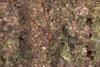 http://mczbase.mcz.harvard.edu/specimen_images/invertebrates/large/144088_Avima_12.jpg