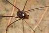 http://mczbase.mcz.harvard.edu/specimen_images/invertebrates/large/144088_Avima_5.jpg