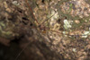 http://mczbase.mcz.harvard.edu/specimen_images/invertebrates/large/144088_Avima_8.jpg