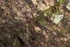 http://mczbase.mcz.harvard.edu/specimen_images/invertebrates/large/144088_Avima_9.jpg