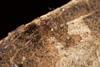 http://mczbase.mcz.harvard.edu/specimen_images/invertebrates/large/144089_Grassatores_10.jpg
