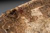 http://mczbase.mcz.harvard.edu/specimen_images/invertebrates/large/144089_Grassatores_14.jpg