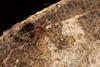 http://mczbase.mcz.harvard.edu/specimen_images/invertebrates/large/144089_Grassatores_9.jpg