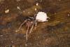 http://mczbase.mcz.harvard.edu/specimen_images/invertebrates/large/144144_Schizomida_4.jpg