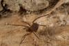 http://mczbase.mcz.harvard.edu/specimen_images/invertebrates/large/144193_Maracaynatum_1.jpg
