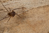 http://mczbase.mcz.harvard.edu/specimen_images/invertebrates/large/144193_Maracaynatum_2.jpg