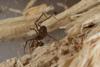 http://mczbase.mcz.harvard.edu/specimen_images/invertebrates/large/144193_Maracaynatum_3.jpg