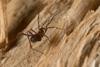 http://mczbase.mcz.harvard.edu/specimen_images/invertebrates/large/144193_Maracaynatum_6.jpg