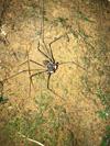 http://mczbase.mcz.harvard.edu/specimen_images/invertebrates/large/144197_Amblypygi_2.jpg