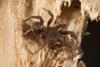 http://mczbase.mcz.harvard.edu/specimen_images/invertebrates/large/144201_Mygalomorphae_16.jpg