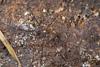 http://mczbase.mcz.harvard.edu/specimen_images/invertebrates/large/144210_Avima_1.jpg