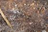 http://mczbase.mcz.harvard.edu/specimen_images/invertebrates/large/144210_Avima_3.jpg