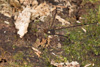 http://mczbase.mcz.harvard.edu/specimen_images/invertebrates/large/144210_Avima_4.jpg