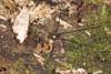 http://mczbase.mcz.harvard.edu/specimen_images/invertebrates/large/144210_Avima_5.jpg