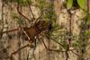 http://mczbase.mcz.harvard.edu/specimen_images/invertebrates/large/144221_Santinezia_2.jpg