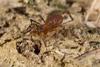 http://mczbase.mcz.harvard.edu/specimen_images/invertebrates/large/144229_Kimulidae_1.jpg