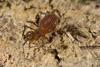 http://mczbase.mcz.harvard.edu/specimen_images/invertebrates/large/144229_Kimulidae_4.jpg