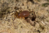 http://mczbase.mcz.harvard.edu/specimen_images/invertebrates/large/144229_Kimulidae_5.jpg