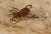 http://mczbase.mcz.harvard.edu/specimen_images/invertebrates/large/144229_Kimulidae_7.jpg