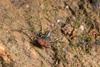 http://mczbase.mcz.harvard.edu/specimen_images/invertebrates/large/144246_Amblypygi_2.jpg
