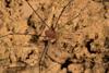 http://mczbase.mcz.harvard.edu/specimen_images/invertebrates/large/144252_Avima_2.jpg