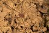 http://mczbase.mcz.harvard.edu/specimen_images/invertebrates/large/144252_Avima_4.jpg