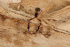 http://mczbase.mcz.harvard.edu/specimen_images/invertebrates/large/144325_Pachyolpium_7.jpg