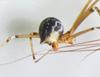 http://mczbase.mcz.harvard.edu/specimen_images/invertebrates/large/144445_Mesabolivar_sp_4.jpg