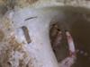 http://mczbase.mcz.harvard.edu/specimen_images/invertebrates/large/144556_Paguroidea_1.jpg