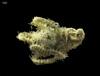 http://mczbase.mcz.harvard.edu/specimen_images/invertebrates/large/145160_Ophiuroidea_1.jpg