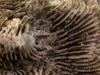 http://mczbase.mcz.harvard.edu/specimen_images/invertebrates/large/147155_Faviidae_sp_2.jpg