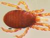 http://mczbase.mcz.harvard.edu/specimen_images/invertebrates/large/147381_Metagovea_matapi_1.jpg