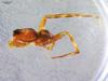 http://mczbase.mcz.harvard.edu/specimen_images/invertebrates/large/15867_Lycosa_algina_1.jpg