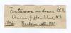 http://mczbase.mcz.harvard.edu/specimen_images/invertebrates/large/1942_Pentaceros_nodosus_1.jpg