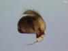 http://mczbase.mcz.harvard.edu/specimen_images/invertebrates/large/22725_Parawixia_porvenir_3.jpg